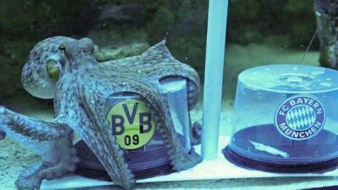 Bayern Munchen = WOW, Dortmund = Comment #Heja BvB #MiaSanMia Ini hanya Prediksi dan Bola itu Bundar !