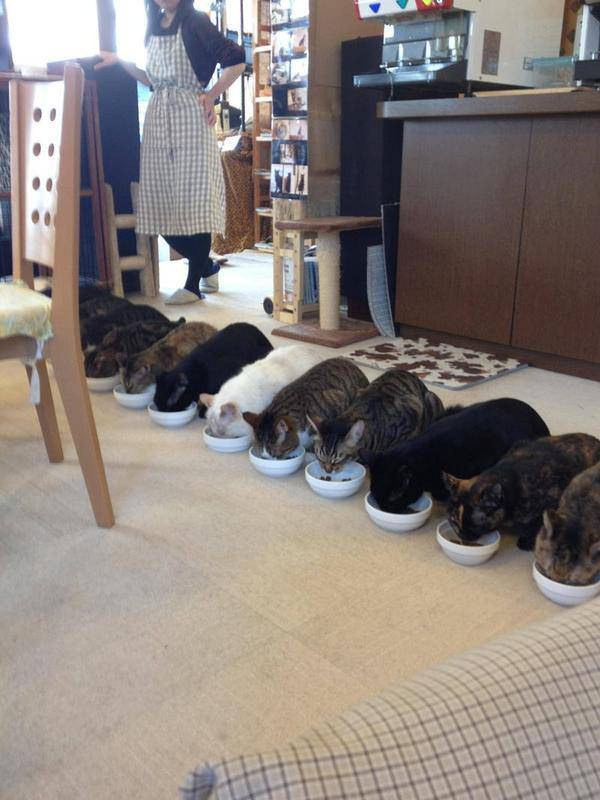 Kucingnya pada lomba makan nih. Rapih yha makannya, baris lagi. WOW! :D