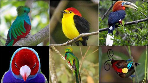 Menurutmu Yang Mana Wow? 1.Glazzo Green Bird 2.Yellow,black Shine bird 3.PututSulse purpls Bird 4.Angry RedBlues Bird 5.Greens Bird 6.ButterFlyingsFity Bird -Ayo Pilih Dan Klik Wow