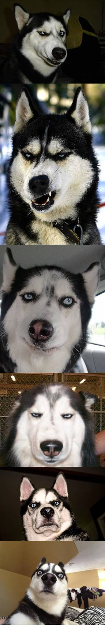 Penggemar Rage atau Meme tau siapa anjing ini. :D (more wow) >do you know them? > http://pulsk.com/134072