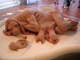 ini lah hewan terlangka di dunia.wow nya donk