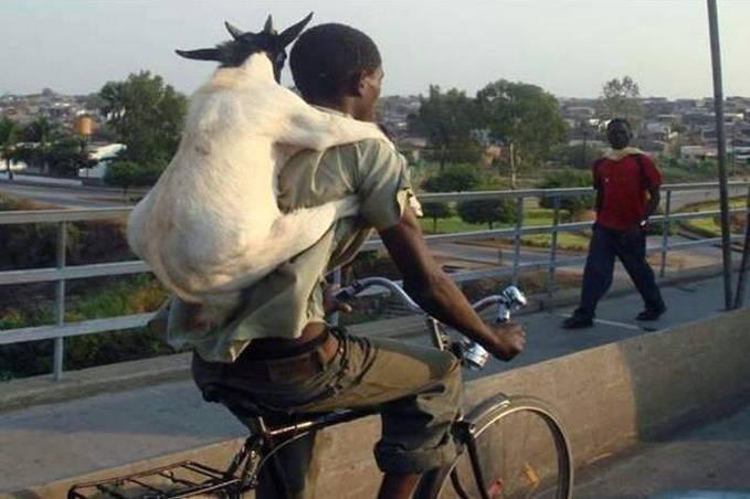 Orang nya aneh banget ya masa kambing di gendong, :) hahahaha wow nya dong