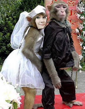Hhaha AnisAMPAH nikah ama monyet..amin.. yang CHITERS wow yaa