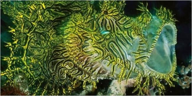 Merlet Scorpion fish Scorpion fish ini wujudnya cukup unik & memiliki banyak tentakel di slrh tubuhnya. Tentakel tsb bentuknya mirip dengan rumput laut & warnanya menyerupai tumbuhan laut.