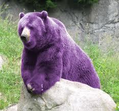 aneh banget yah beruang warna ungu,mungkin abis dipilok kali