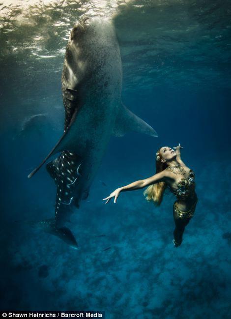 Kreatifitas Fotografi Memadukan Ikan Paus Dengan Wanita Alih-alih memamerkan kurva di catwalk seperti model internasional lainnya, Hannah Fraser, 36 dan Roberta Mancino, 32 dengan gagah berani menyelam hingga 25 kaki di dasar laut.