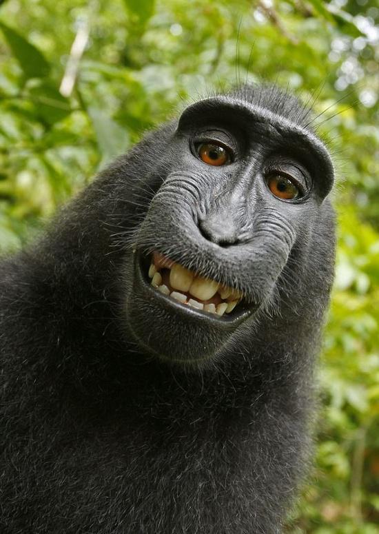 yaaaaaaaaaay......... monyet koplak