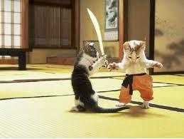 wow kucing ini lagi latihan silat .