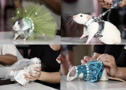 Fashion Show Tikus di New York...Wow