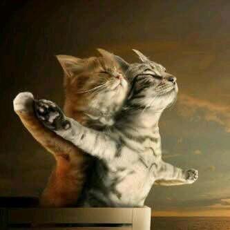 Waw ternyata kucing juga bisa kaya manusia.... apalagi kaya film titanic...mmm so switttt....... gimana pendapat kalian????? jangan lupa Wawnya....