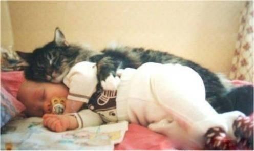berapa wow untuk persahabatan adek bayi sama kucing ini.. for more.. http://www.pulsk.com/u/134585