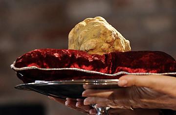 Jamur Putih Italian Alba Truffle Jamur raksasa ini dijual dengan harga $US 160.406 atau nyaris setara dengan Rp 1,5 miliar dengan berat 1,54 kilogram. Wownya Donk!!