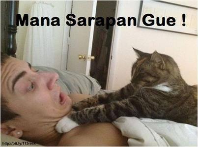 Wkwkwkwk ni kucing maksa minta sarapan ma majikannya hahahaha..... Yg suka wow ya