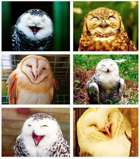 siapa bilang,, burung hantu pada nyeremin,, ne ane share gambar burung hantu, yang unyu-unyu... hehe :) :)