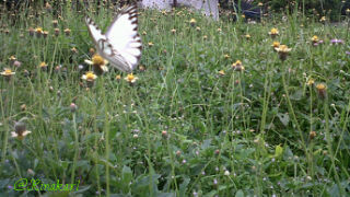 The beutifull butterfly