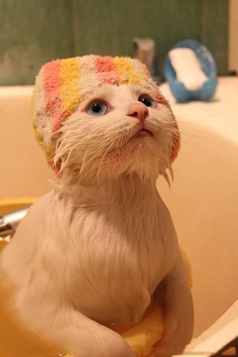 shampo mana shampo..? :D
