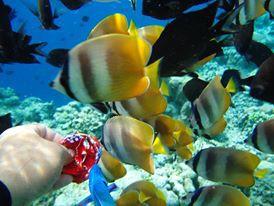 Siapa tak kenal Bunaken? Surga bawah laut yang keindahannya sangat terkenal dan mengesankan!