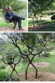 Ini Pohon Mirip apa yah ? :D A. Manusia B. Hantu C. Orang :D Silahkan jawab :D jangan lupa WOW!!