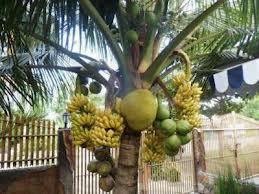 Ini Pohon Atau Toko Buah yah ? :D haha WOW!!
