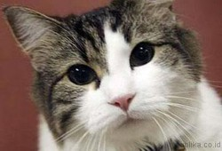 Oscar, Kucing Pengendus Kematian
