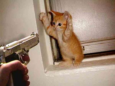 wow kucing nya angkat tangan, koplak :D