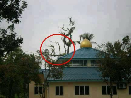"SUBHANALLAH... Inilah Salah Satu tanda kebesaran Allah, Pohon bertuliskan nama ALLAH. » Jika anda Muslim, silakan klik ""WOW"" » Jika anda kagum melihat ini, klik ""WOW"" dan tulis dikomentar ""SUBHANALLAH""."