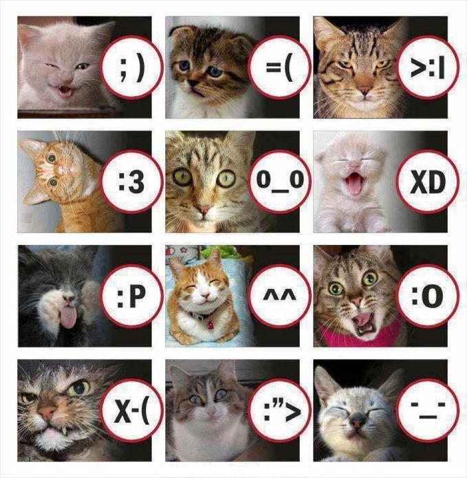 inilah Emoticon yang biasa kita pakai, dan digambarkan dengan wajah kucing. jangan lupa WOW nya