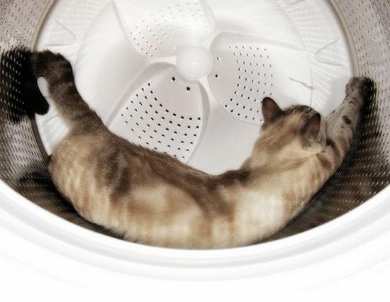 Inilah yang dilakukan kucing ketika masuk ke dalam mesin cuci. WOW PLEASE... :D ;)