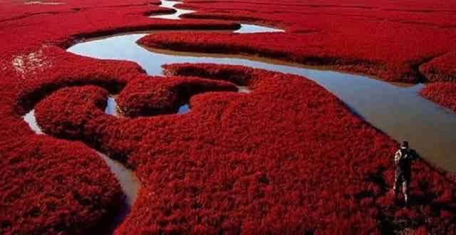 The Red Beach terletak di Delta Sungai Liaohe, sekitar 30 kilometer sebelah barat daya dari kota Panji, China. Dinamakan Pantai Merah lantaran warnanya yang merah menyala karena sejenis rumput laut yang berkembang di tanah salin-alkali .