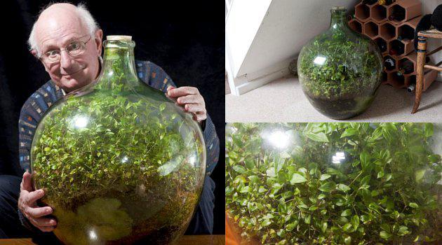 Tanaman 40 Tahun Tumbuh Dalam Botol Kedap Udara dan Air