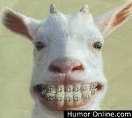 WOW Kambing di behel gigi nya....!!!