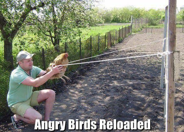 Hai,....sobat Pulsker.... Main Angry Bird yuk.... Pake ayam tetangga juga boleh kok......