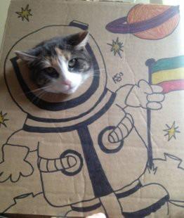 Dikira manusia doang yang punya cita - cita tinggi?? Kata siapa, ternyata hewan juga punya cita - cita yang tinggi, contohnya kucing. Meski dengan gambar lucu ini ternyata kucing juga ingin memperlihatkan apa cita - citanya.