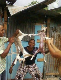 one wow a thousand pray for this unsin cat T_T what do you think about animal that kill this cat???