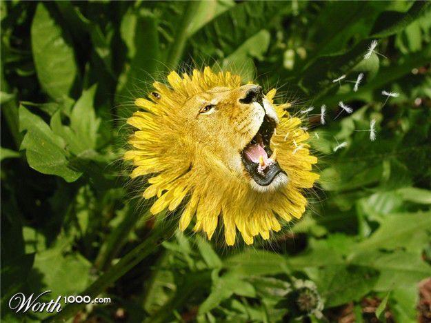 Manipulasi Foto Unik : Penggabungan Hewan dan Tumbuhan (part 8) Dan d Lion