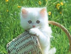23 Fakta Unik Tentang Kucing yang Orang Belum Tahu