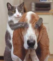 hehehe,si kucing,mau main tebak-tebakan sama si anjing tuch