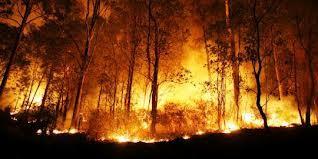 Click WOW Anda Membantu Memadamkan Api Di PekAnbaru Riau I WOW 1.000.000 Liter Air