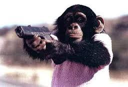Pada bulan Juli 2010, China Daily melaporkan bahwa ada indikasi pasukan pemberontak Taliban sedang mempersipkan tentara mujahidin monyet. Laporan tersebut menyatakan kan bahwa pemberontak menggunakan sistem penghargaan-dan-hukuman