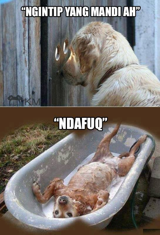 hihihi... ..anjing ngintip anjing nih..!