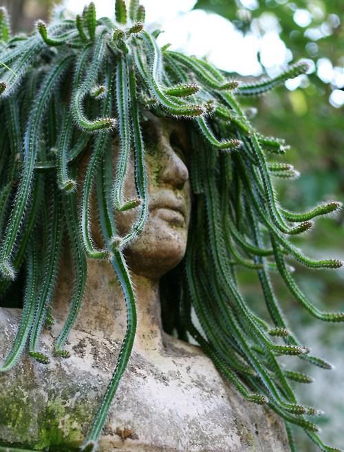 Wow.. kaktus medusa! ssssss...