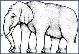 ada berapakah sebenarnya kaki gajah ini, yg tau coment dan jangan lupa klik wow