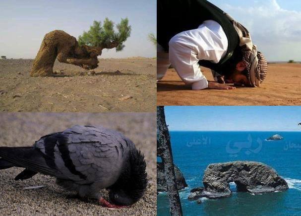 """SubhanAllah.. Semua makhluk seluruh alam bersujud & menyembah kepada Allah. Jika Anda Muslim silakan Klik """"SUKA"""" Foto Ini. Jika Anda Kagum melihat foto ini, Tulis """"WOW"""" di komentar."""