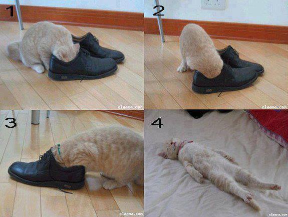 hahhahahaha rasain lo kucing