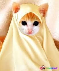 Wow Kucing Ini Imut Dan Muslimah Pasti Kucing Itu Islam Kucing