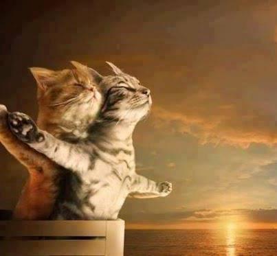 titanic versi kucing!!! lucu gk? klo lucu WOW nya donk!!