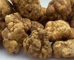 1. Jamur Putih Italian Alba Truffle Jamur raksasa ini dijual dengan harga $US 160.406 atau nyaris setara dengan Rp 1,5 miliar dengan berat 1,54 kilogram.