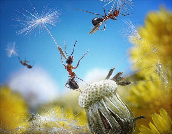 KIsah-kisah semut Fotografer Rusia Andrey Pavlov membuat seri foto lucu ini yang disebut Kisah-Kisah Semut. Ini menunjukkan kepada kita semut dalam hiburan spontan dan koreografer. keren bukan? wownya ;)
