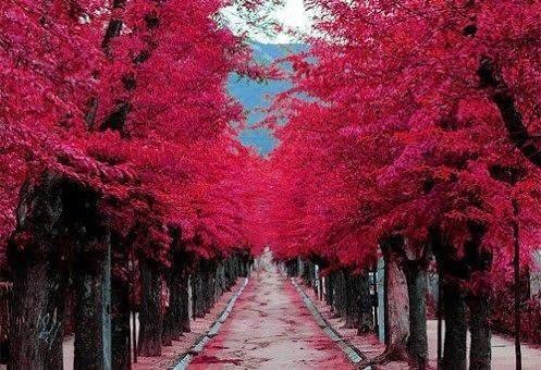 Burgundy Street, Madrid, Spain.