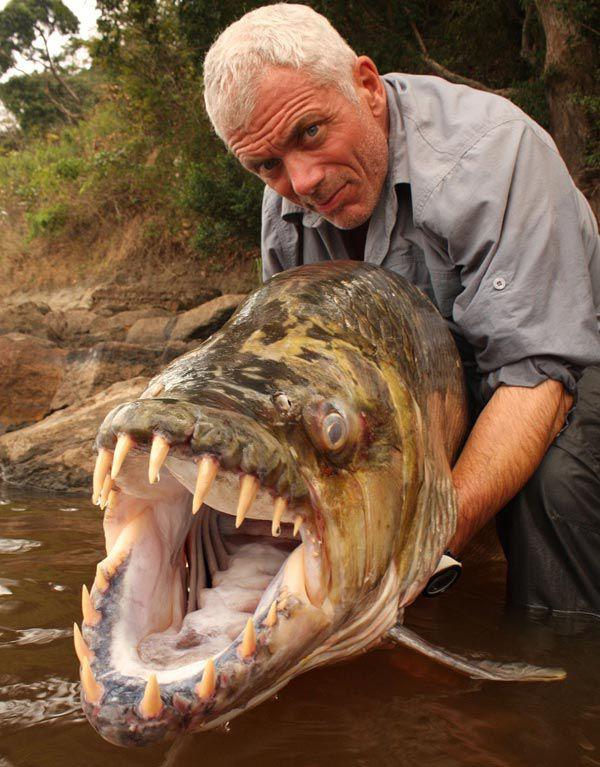 Ditemukan Ikan Piranha Terbesar Di Sungai Amazon WoW! Yang kecil aja bisa mencabik cabik daging, gimana yang sebesar ini yah...?